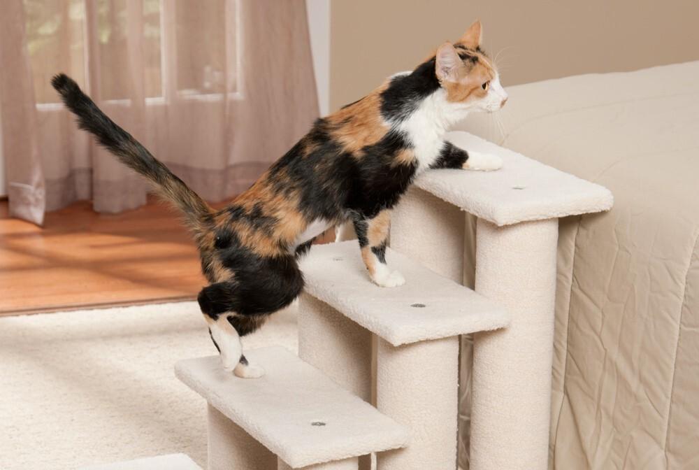 Кошки на дому для пожилых дом престарелых область дешево