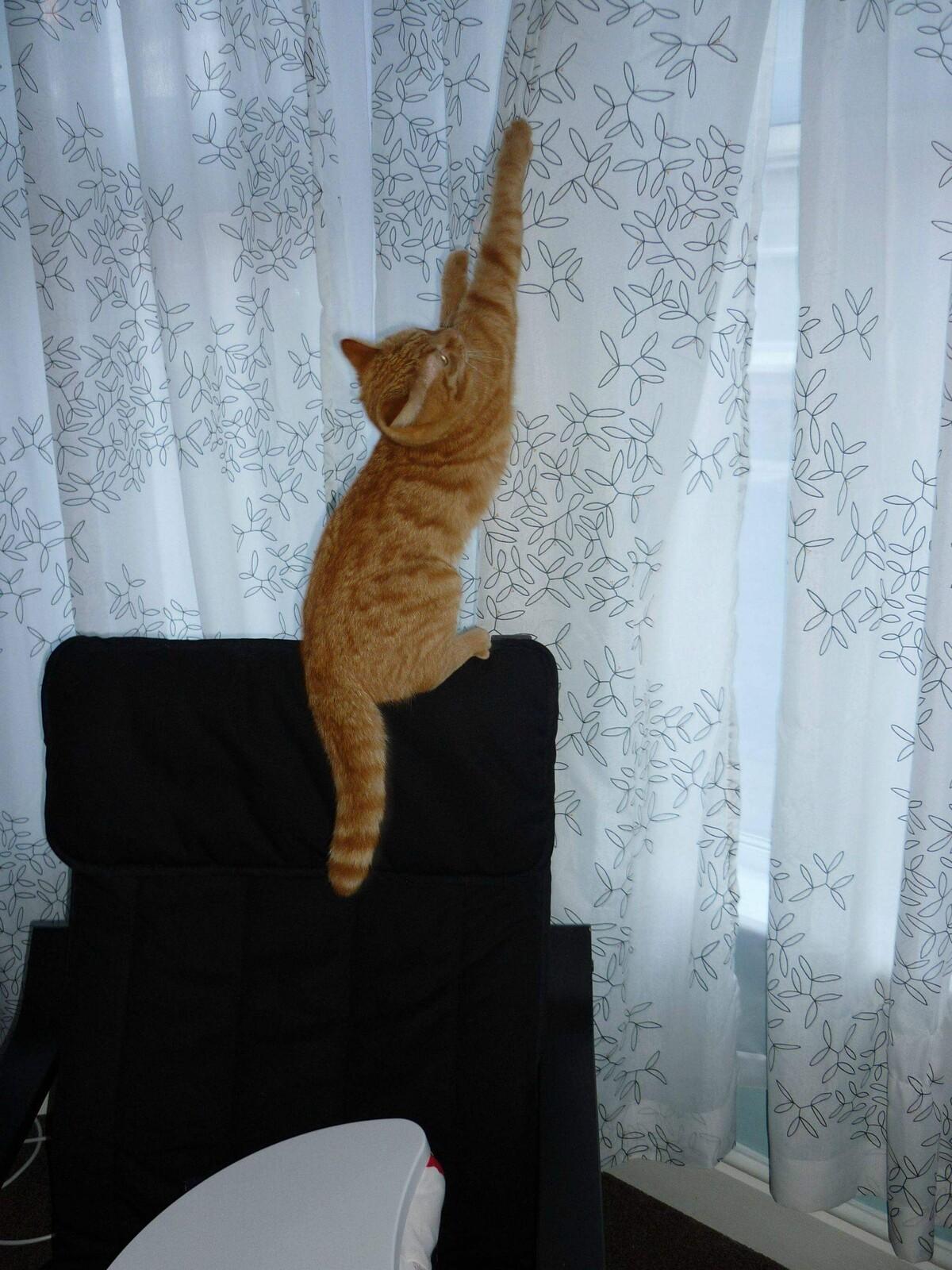 Ремонт квартиры с учётом кошек 25