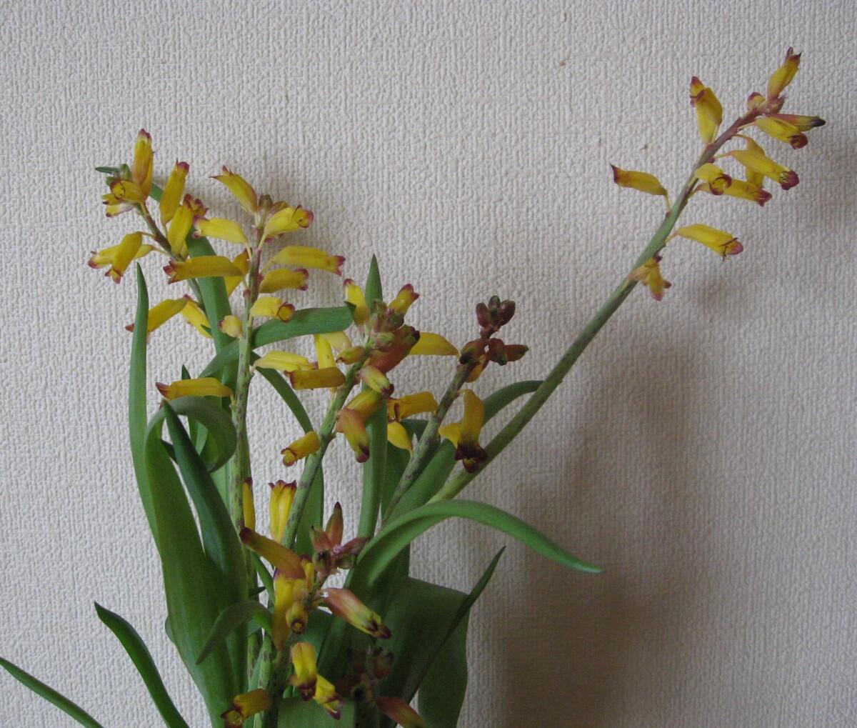Самые дорогие комнатные цветы - названия с фото