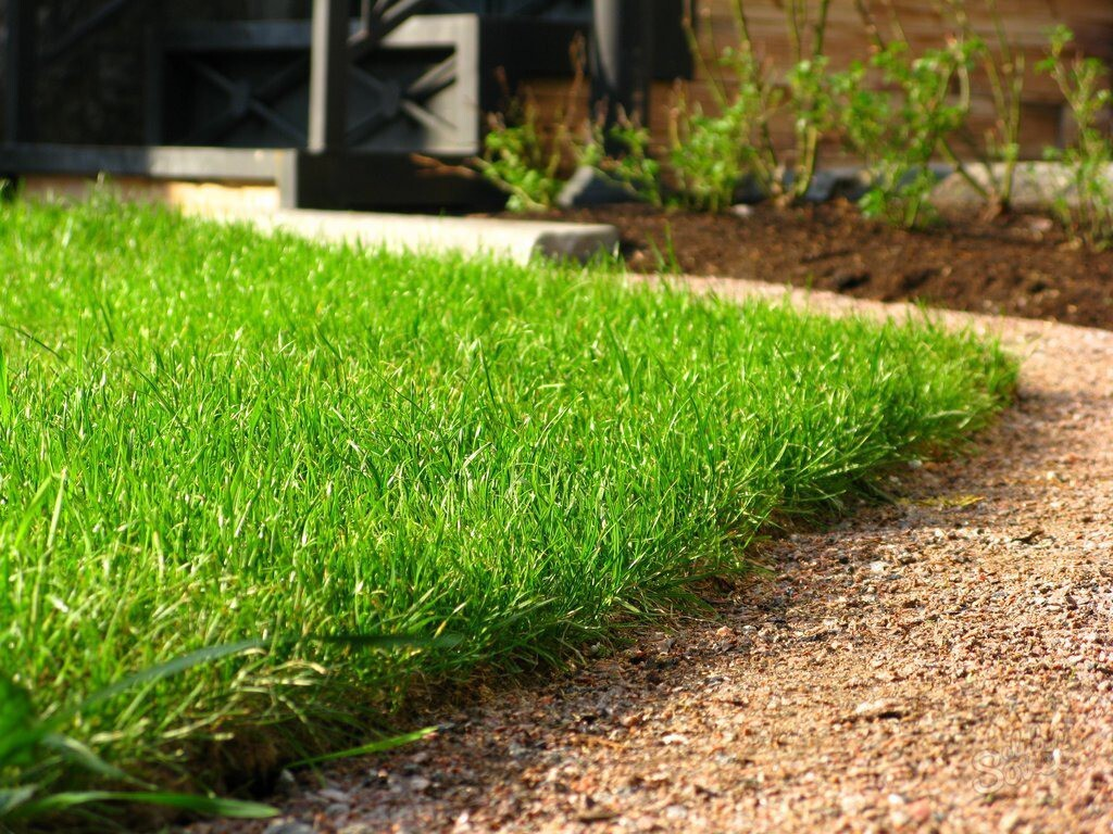 Газон для ленивых: виды, подготовка почвы, посадка семян и рекомендации по уходу