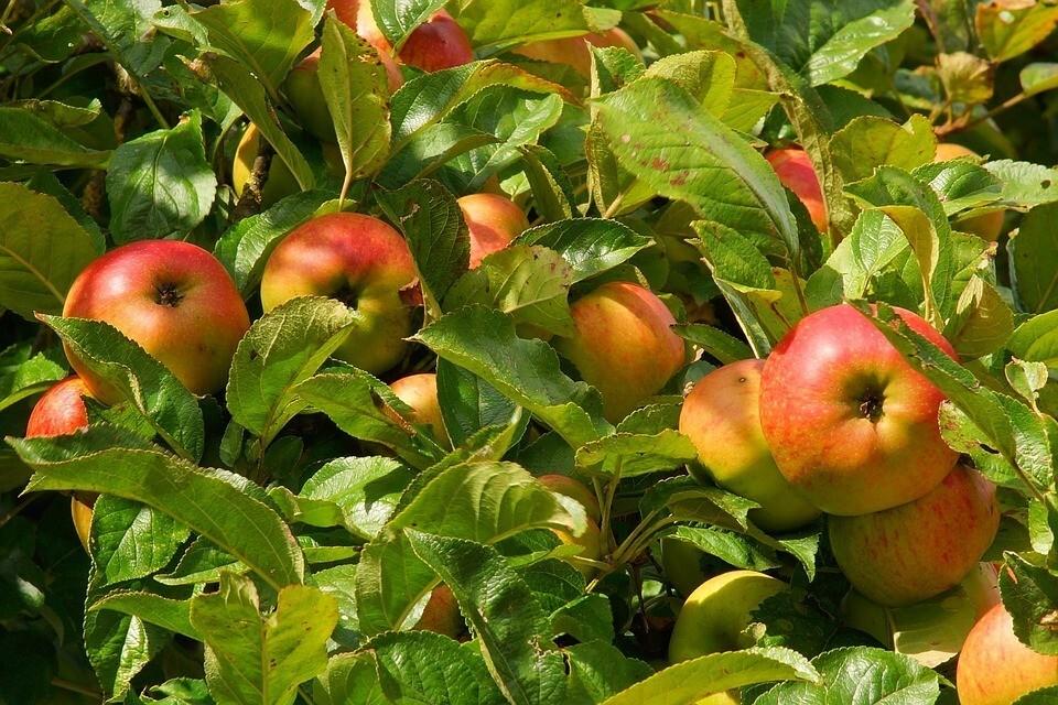 Картинки по запросу Когда сажать плодовые деревья