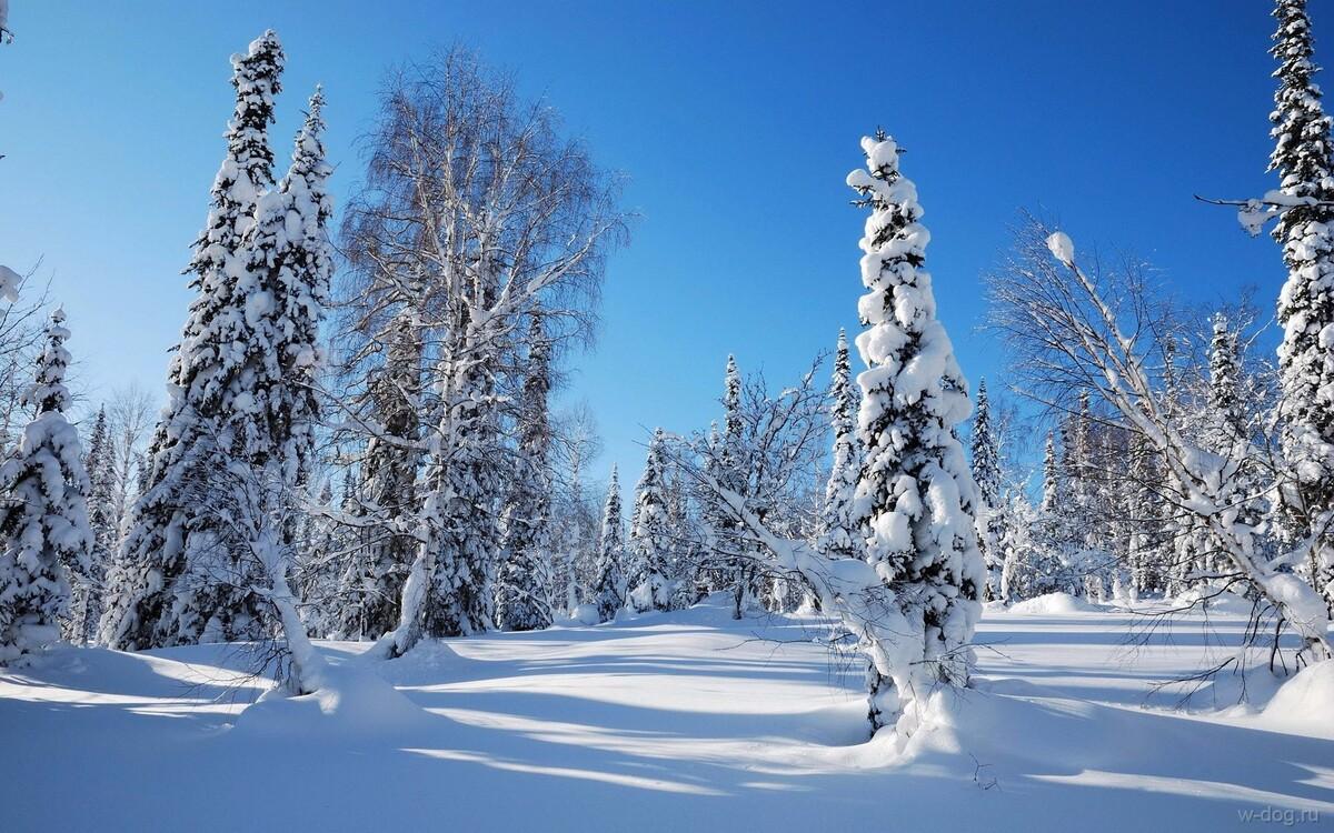 Морозы в Костроме в ближайшие дни будут лишь усиливаться