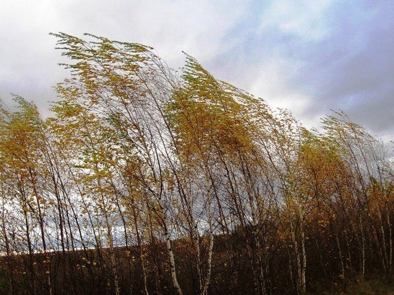 В Костроме и по области прогнозируется усиление ветра