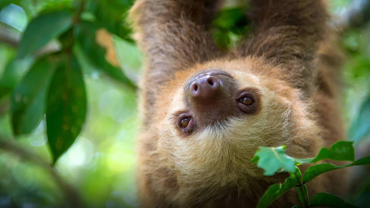 Где можно установить ленивец