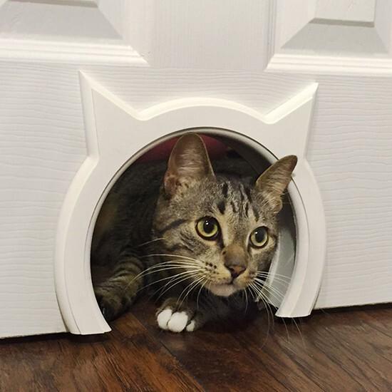 лаз в двери для кошки