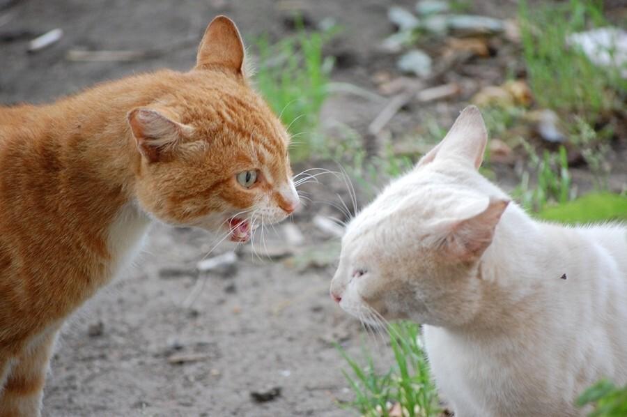 В Рыбинске выявлен случай бешенства животных