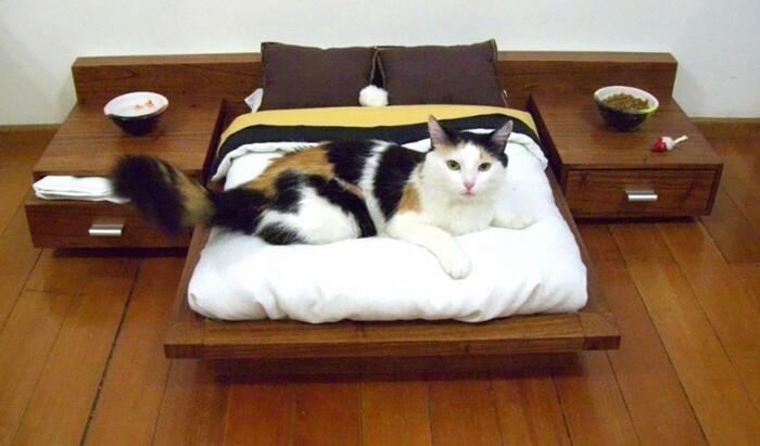 Удивительные идеи дизайна кошачей мебели: необычные лазалки для кошек