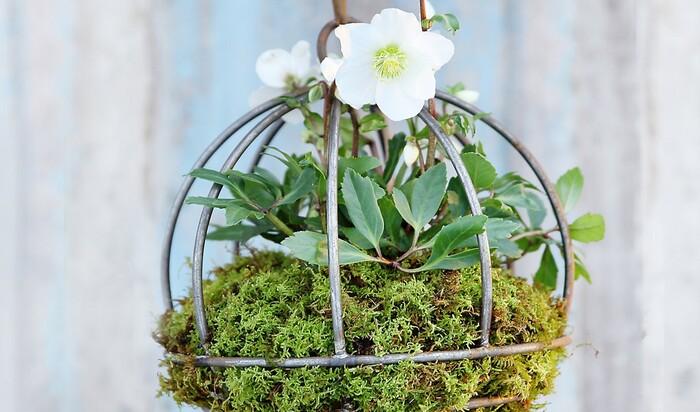 Привет от Семирамиды. Как оборудовать висячие сады у вас дома