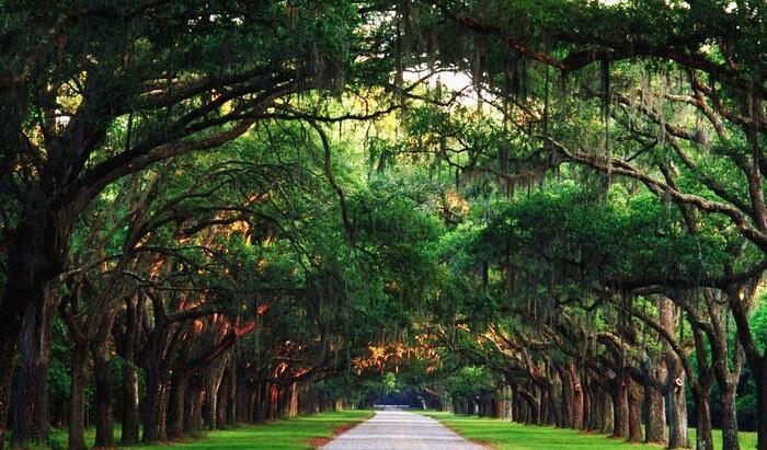"""Да или Нет деревьям в """"исторических"""" местах?"""