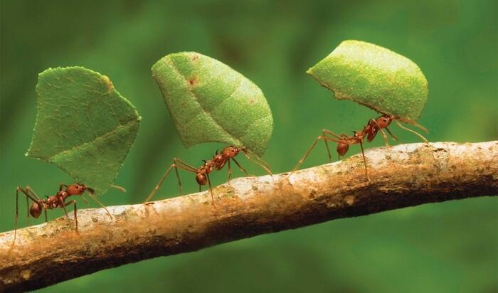 8 натуральных средств для действенной борьбы с муравьями