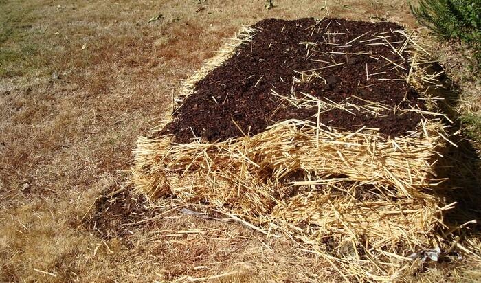 Сад-лазанья: улучшаем почву по методу австралийских фермеров