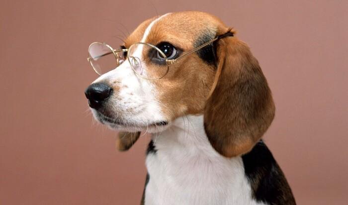 Разоблачение популярных мифов о домашних животных
