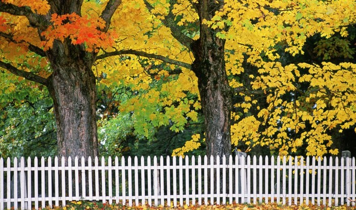 Советы, которые помогут ухаживать осенью за своим двором и садом