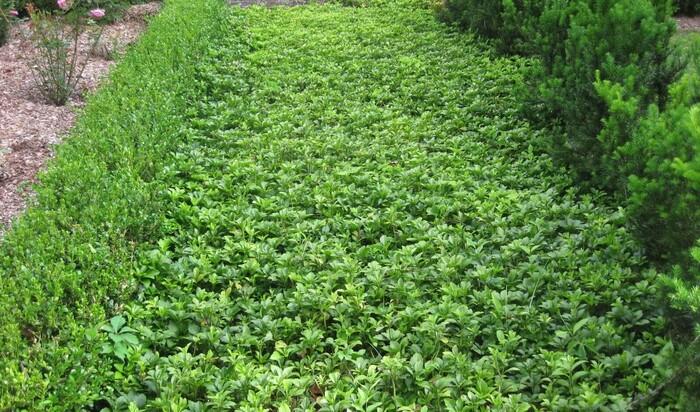 Зелёные вредители. От каких растений лучше держаться подальше?