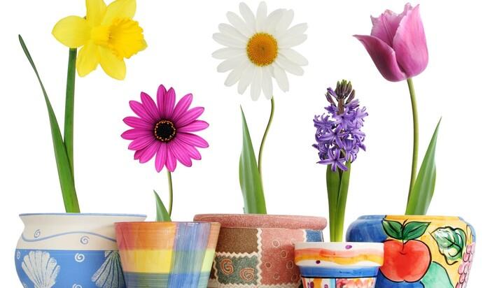 Как создать креативные горшки для растений из старых вещей