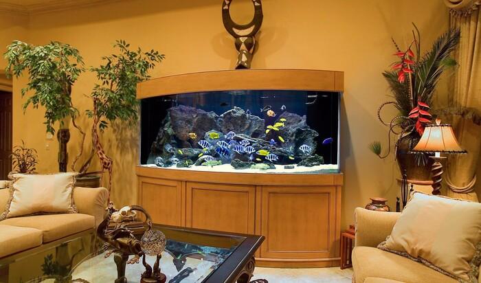Домашний водный мир. Стеновые аквариумы