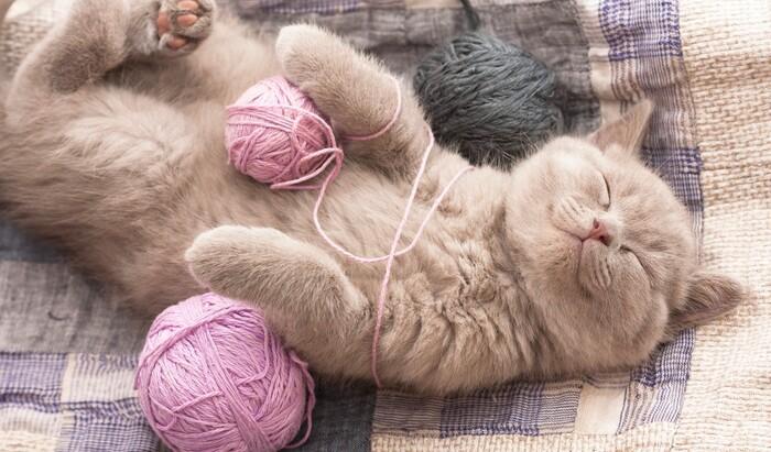 Модные тенденции в интерьере с точки зрения кота