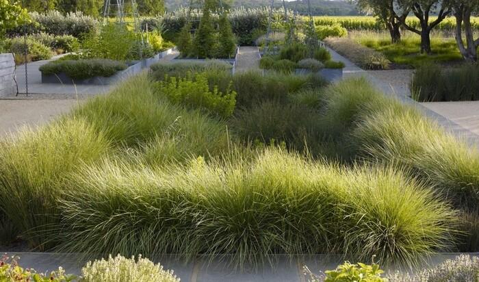 Дождевые сады, которые очистят воду на дачном участке