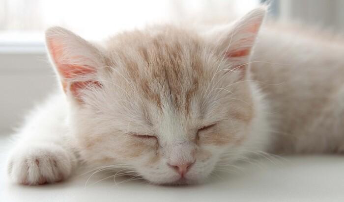 Кошачий сон: сколько, где и как должна отдыхать ваша кошка?
