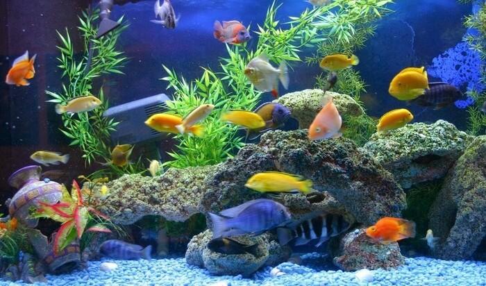Бытовая химия и аквариум: скрытая опасность