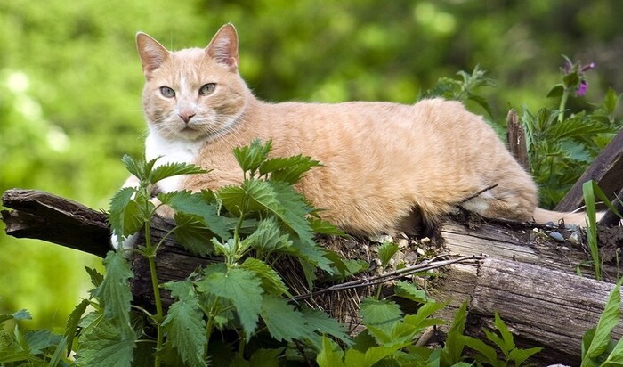 Как для пожилого кота сделать более комфортным ваш дом?