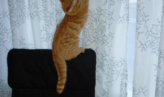 """О чём молчат владелицы кошек, или Что может """"сойти с лап"""" любимому коту?"""