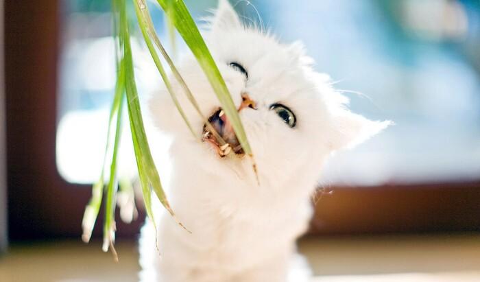 5 съедобных растений для вашей кошки, которые стоит посадить дома