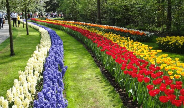 Самые прекрасные цветочные поля со всего мира