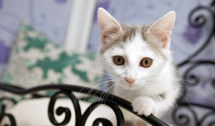 Ваша кошка тоже хочет отдыхать. Пятизвездочные отели для животных.