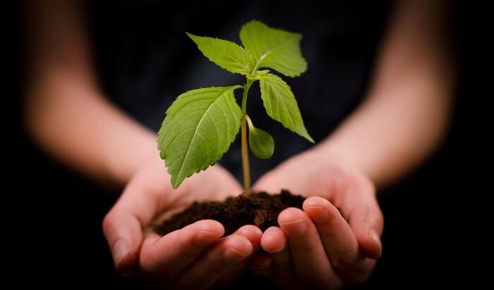 Как создать ландшафт в традициях экологичного подхода?