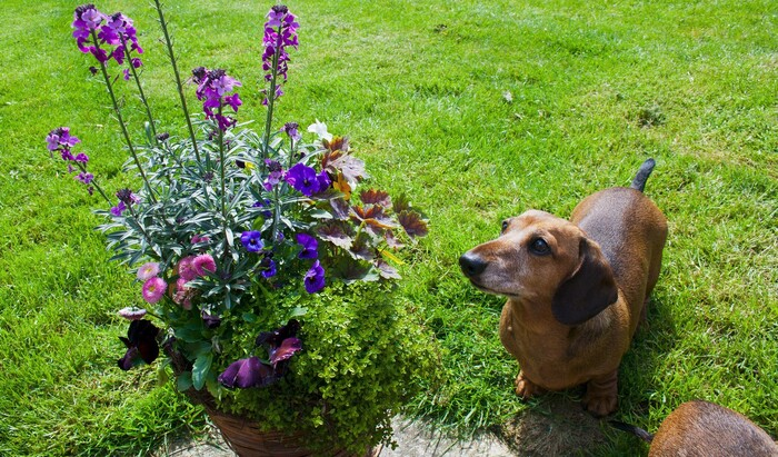 5 способов спасти сад от собаки