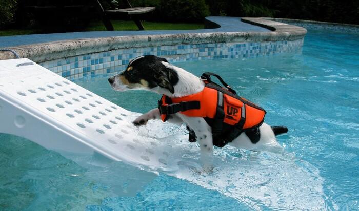 Собака в бассейне: меры безопасности, которые необходимо принять