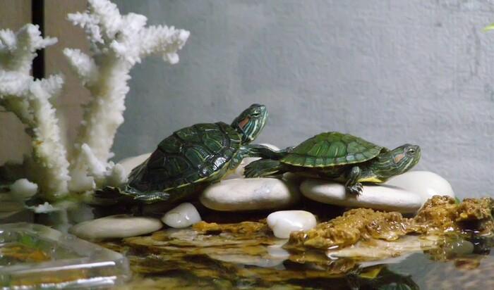 Оборудуем аквариум и террариум для черепах разного вида