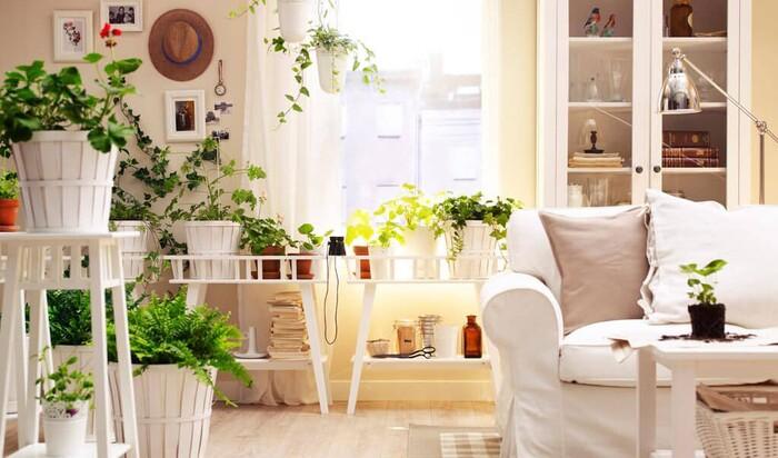 Какие растения нежелательно выращивать в помещении