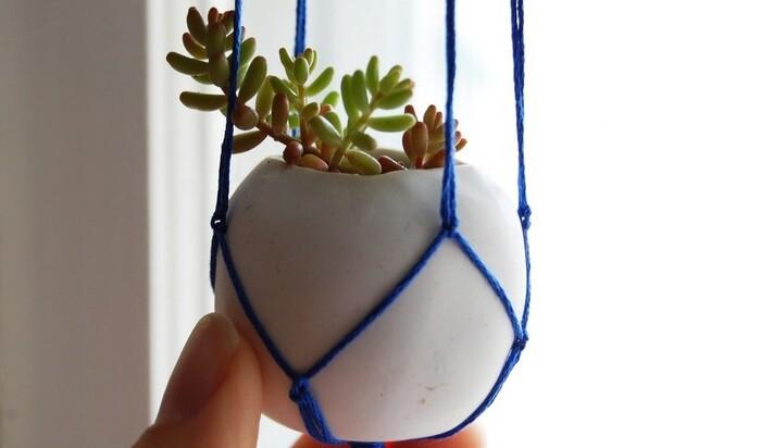 Зимний сад в доме: виды, подходящие растения и лучшие идеи для воплощения