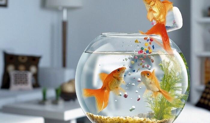 Как сделать рыбок счастливее? Тонкости ухода за жителями аквариума