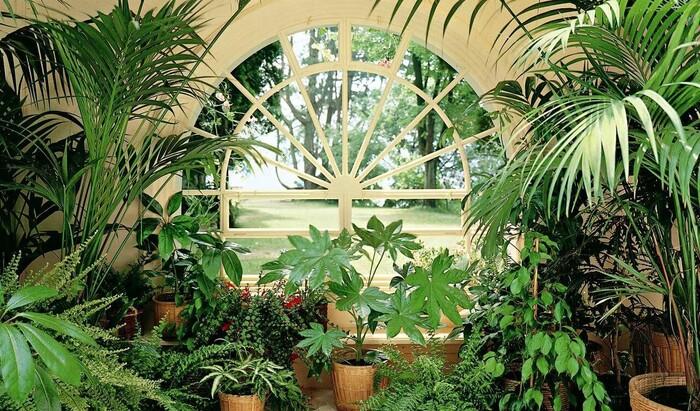 Домашняя оранжерея: обустройство зимних садов в частном доме