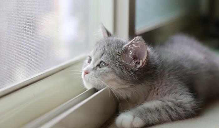 Кошка и падение: как обезопасить животное от падения с окна