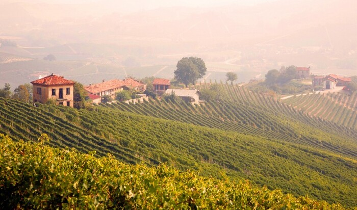 Покупка итальянского виноградника – новое вложение для богачей