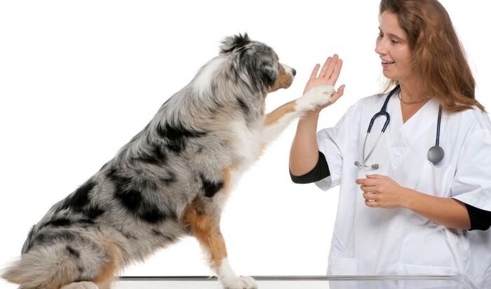 В чем причины врачебных ошибок? Виноваты не только ветеринары