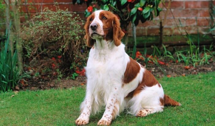 Невидимая ограда для собаки – роскошь или суровая необходимость