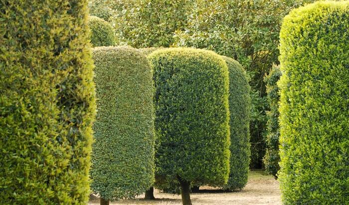 Интернет-аукцион Друо: не хотите ли дерево за 30 000 евро?
