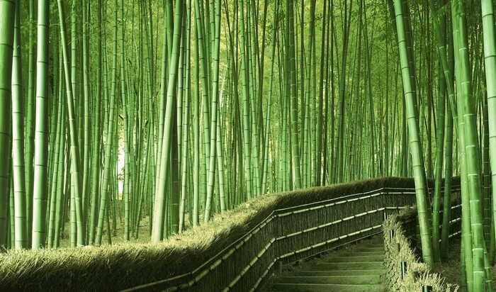 Все прелести и недостатки живого бамбукового заграждения