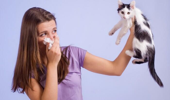 Наиболее распространённые аллергии на домашних питомцев