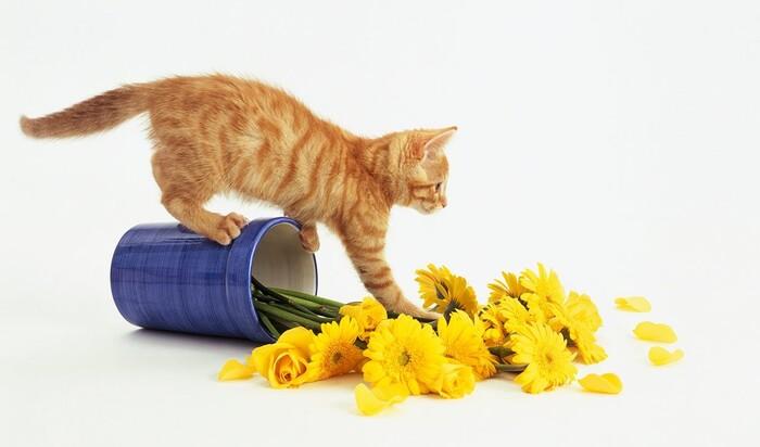 Почему коты любят скидывать вещи на пол? Странное увлечение или оправданная необходимость