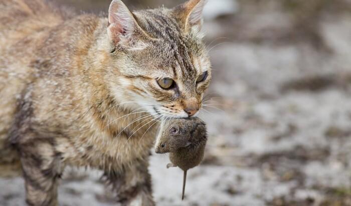 Почему коты решили жить с людьми? Новые исследования приоткрывают завесу тайны