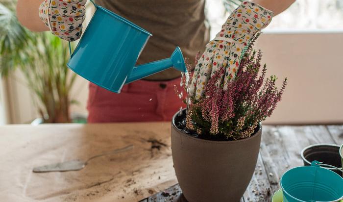 Как правильно поливать комнатные растения?