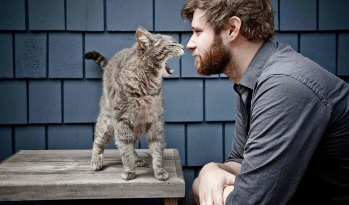 Ошейник для кошки, который научит вашего питомца разговаривать