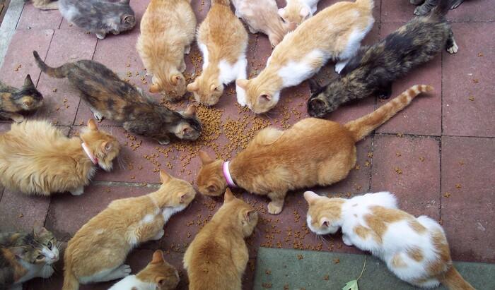 Помощь ближнему: как организовать «пункт кормления» для уличных кошек