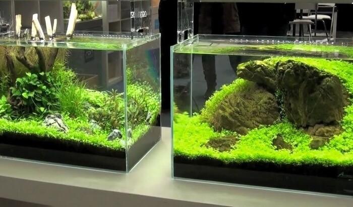 Мини-аквариумы для тех, кто дорожит пространством: за или против